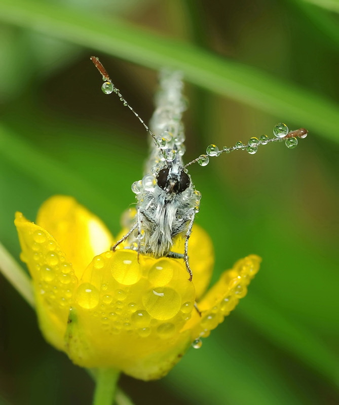 Super macro-photographu by Andrey Osokin